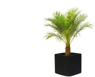 plante d extérieur