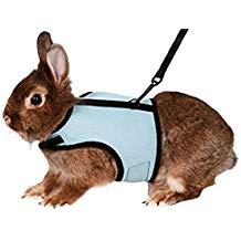 accessoire pour lapin
