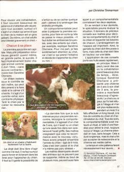 article chien