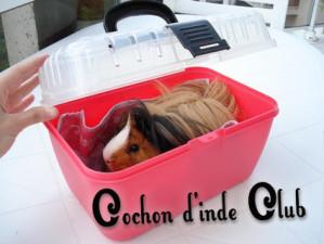 caisse de transport cochon d inde