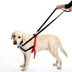 colliers laisses harnais collier anti traction