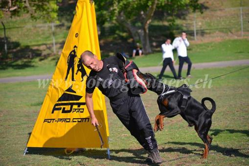 equipement canin