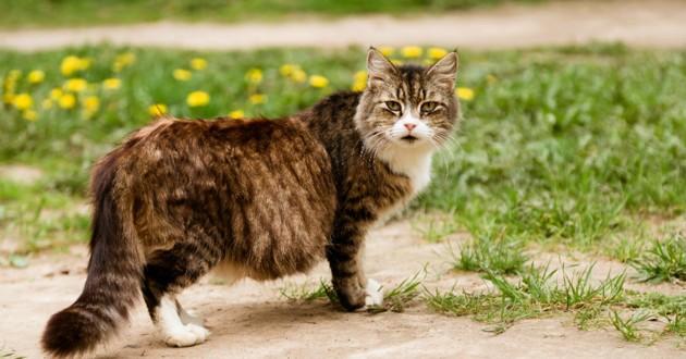 gestation chat