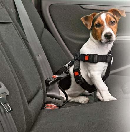 harnais ceinture de sécurité pour chien
