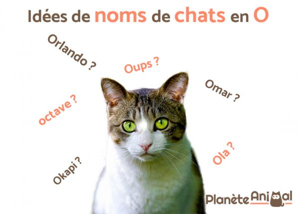 nom de chat mignon et original