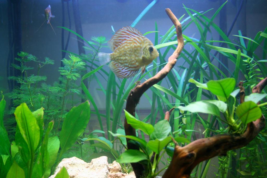 resistance aquarium