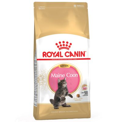 royal canin maine coon kitten