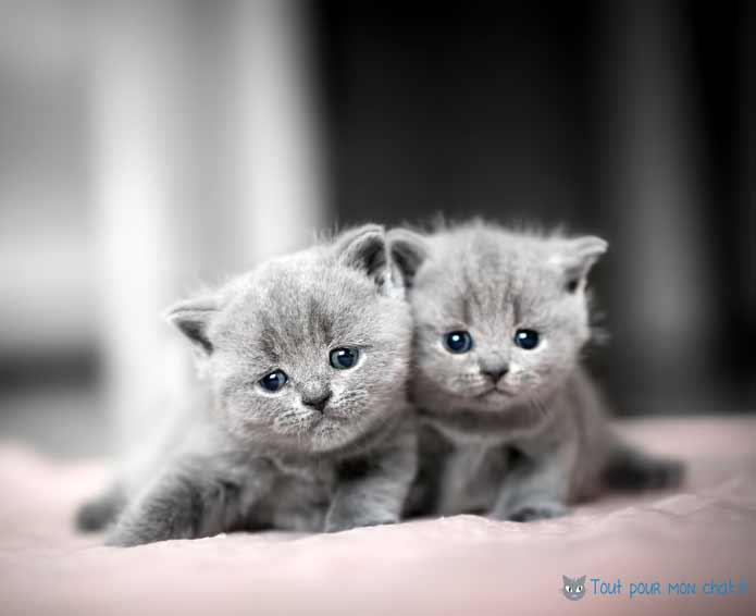 tout pour les chats