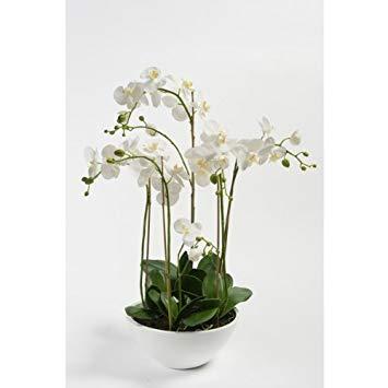 fausse orchidée