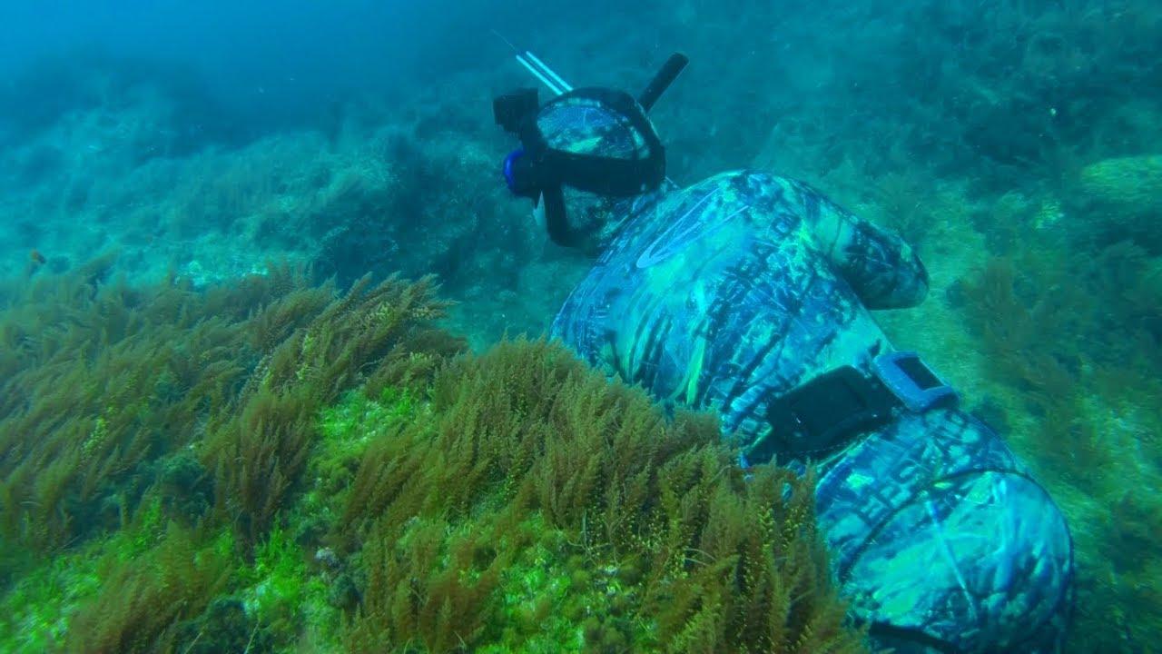 peche sous marine