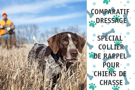 collier dressage chien chasse