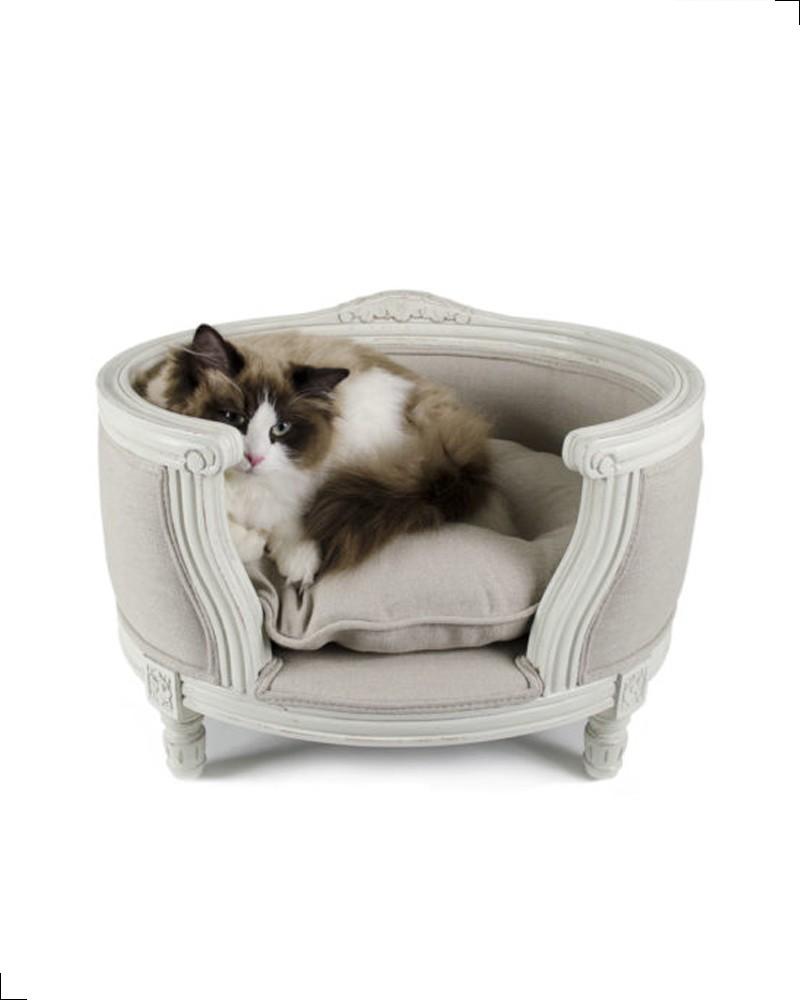 canapé chat