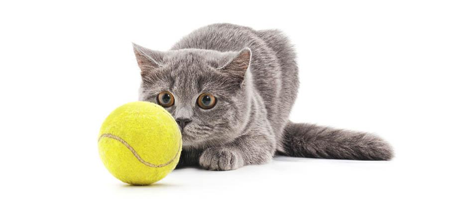 chat jeux de chat