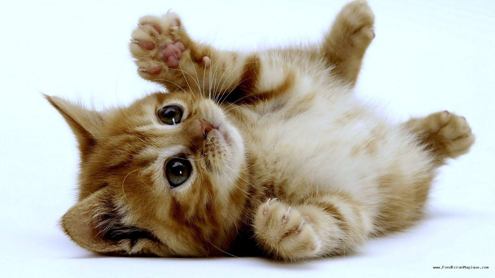 chat petit