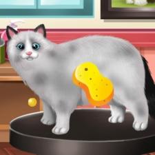 jeux avec un chat