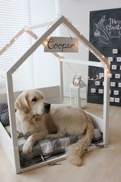 niche golden retriever