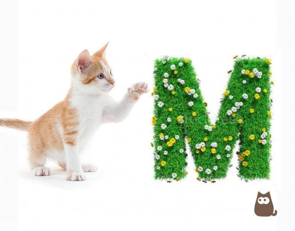 nom de chat en m