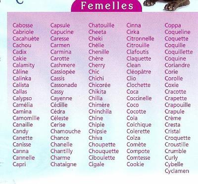 prénom pour un chat